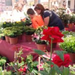 Flower market in Pilar de la Horadada